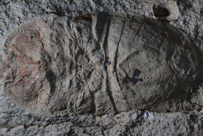Rekonštrukcia fosílie
