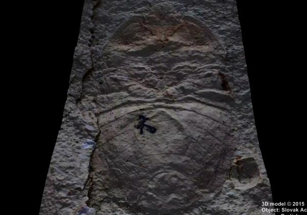 Skamenelina hmyzu (Sehirus carpathiensis z obdobia Paleogénu)